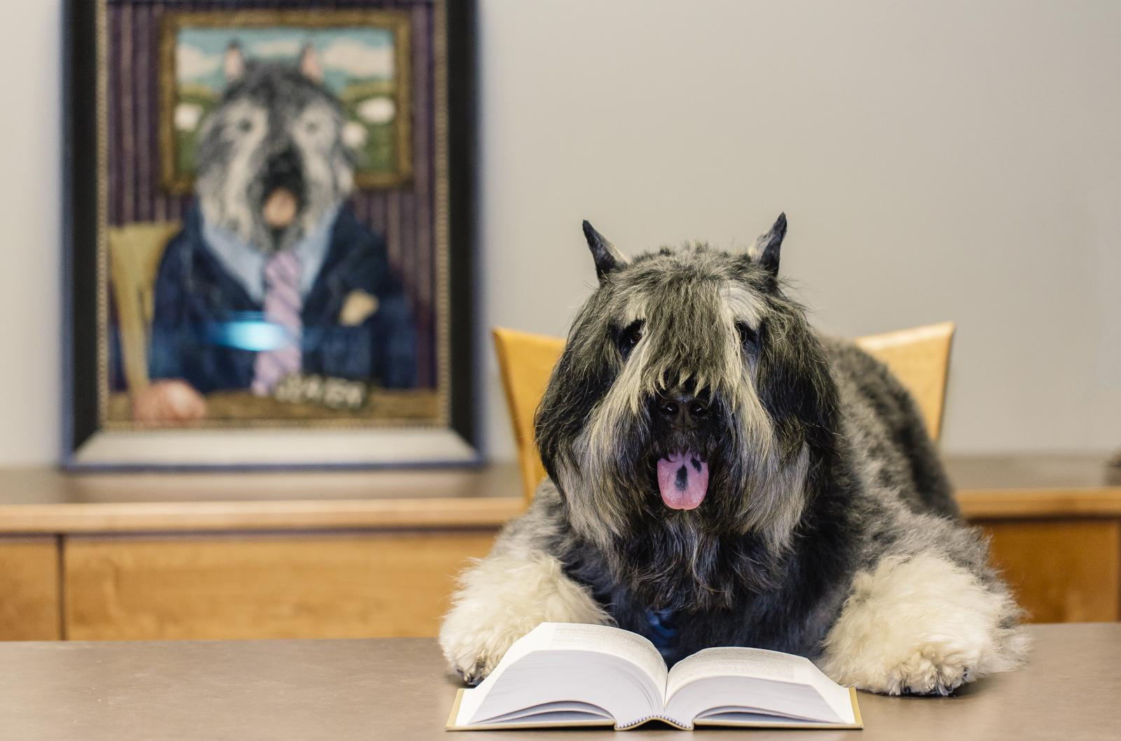 A true law dog, Slater, a shaggy dog wearing a necktie sits at desk in front of an open legal book. Behind Slater is a painting that shows the same dog in a full suit. While the photo is intended to be fun and whimsical, i